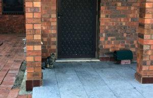 オーストラリアの野良猫とワイルドな野生動物たち