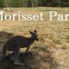 シドニー近郊の無料でカンガルーと触れ合えるモリセットパークへの行き方と必要な持ち物【Morisset Park】