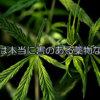 日本も大麻が合法化され解禁になる可能性について | マリファナはほんとは危険ではないのに違法になった理由